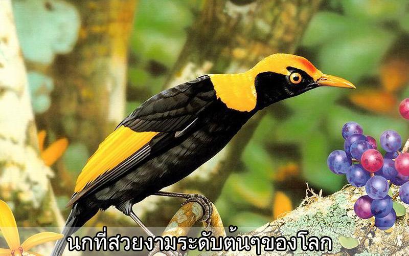 bird full tram